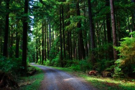 ForestServiceRoad.ForksChamberOfCommerce