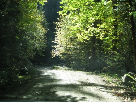 ForestServiceRoad.WashingtonFilmworks