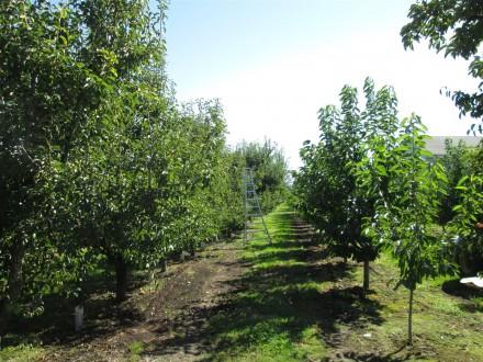 OrchardYakima.WF